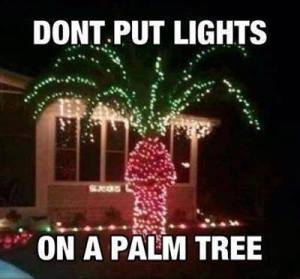 lights on palm tree